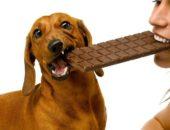Шоколад яд для собак