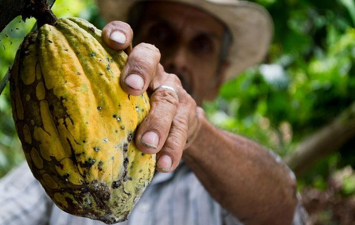 Колумбия обязалась производить шоколад без вырубки лесов