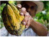 Колумбия пообещала производить шоколад без вырубки лесов