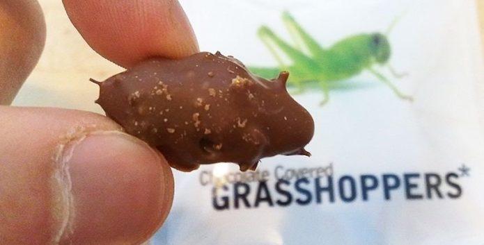 Шоколад из насекомых