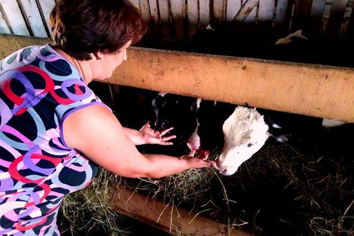 Шоколадный корм для коров