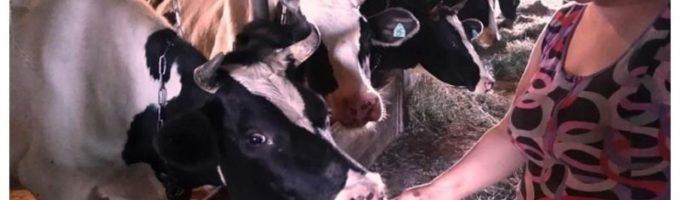 В Пермском крае фермеры кормят коров и поросят шоколадом и карамельками